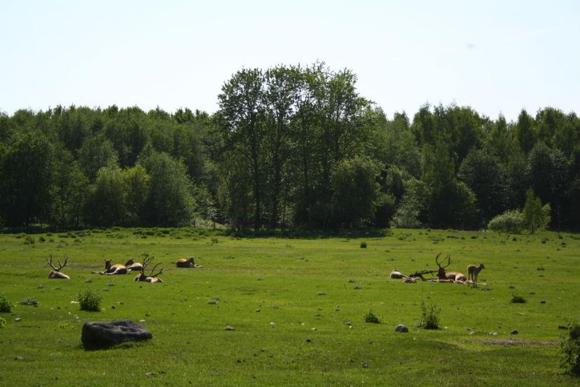 зоопарк Таллин