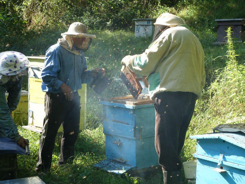 сбор меда в Армении