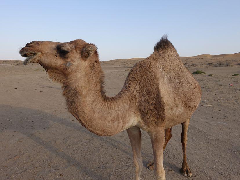 Пустыня Кашана