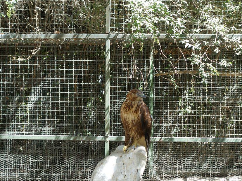 Сад Птиц Парандегон
