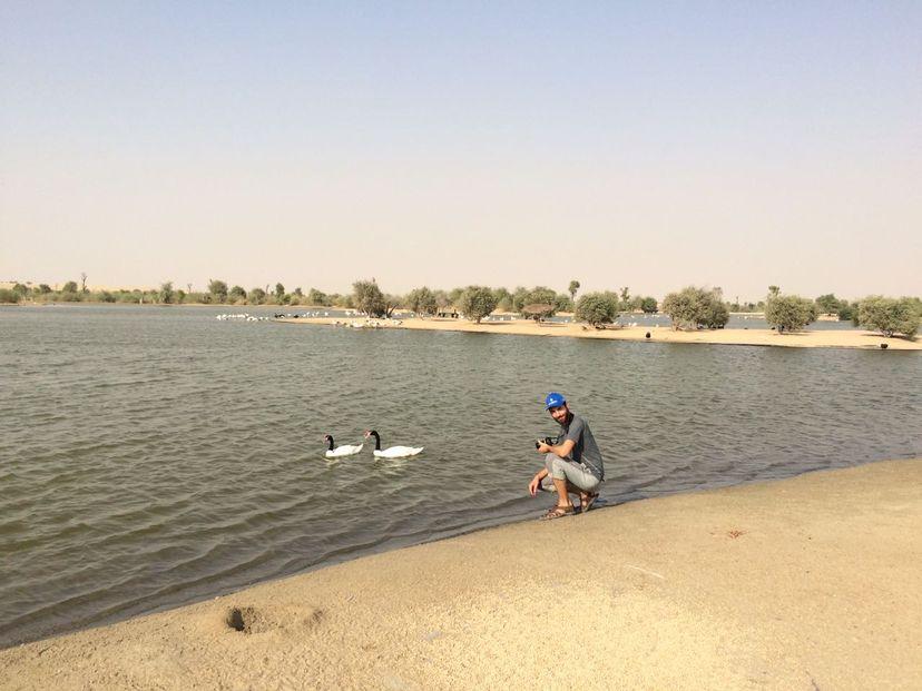 Озера с птицами