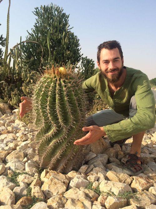 кактус в ОАЭ