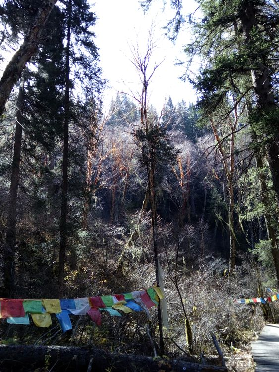 лесной парк Далу Китай