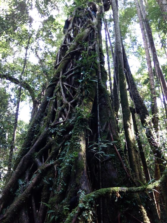 лаосские джунгли