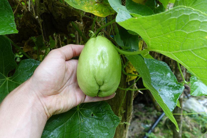 овощи малайзия