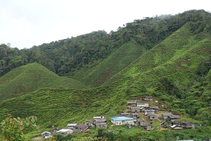 деревня малайских аборигенов