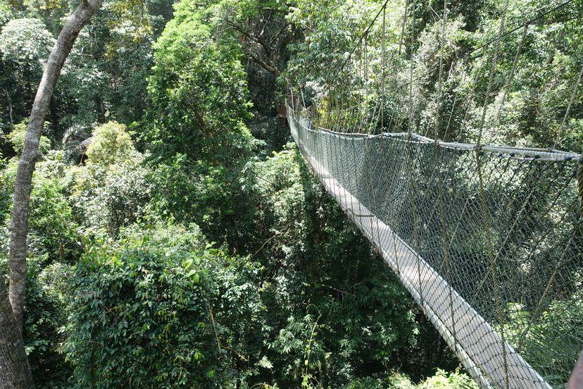 подвесная веревочная дорога в джунглях