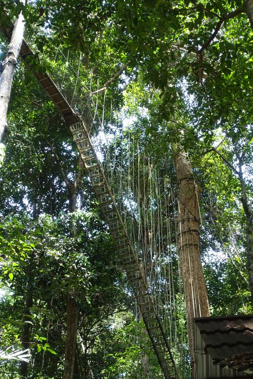 веревочная дорога в джунглях малайзия