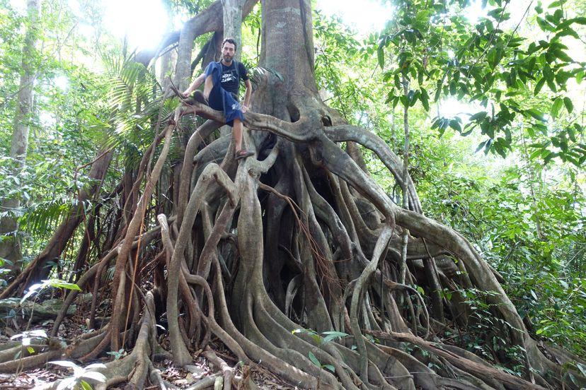 дерево для наблюдения за животными