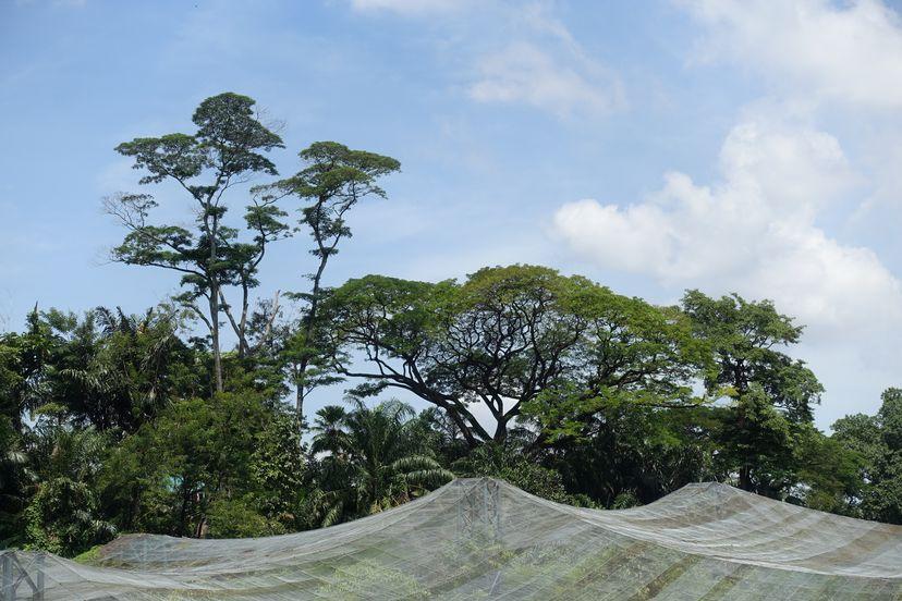 Птичий парк Куала Лумпур