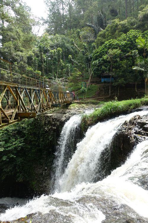 Лесной парк Juanda
