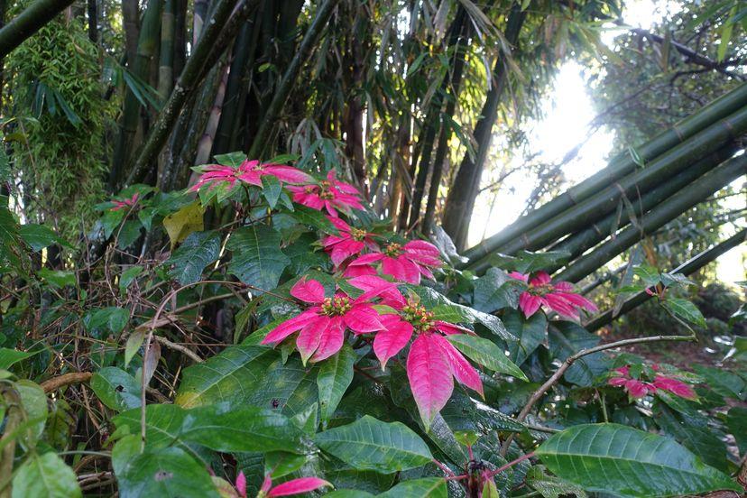 флора острова Ломбок