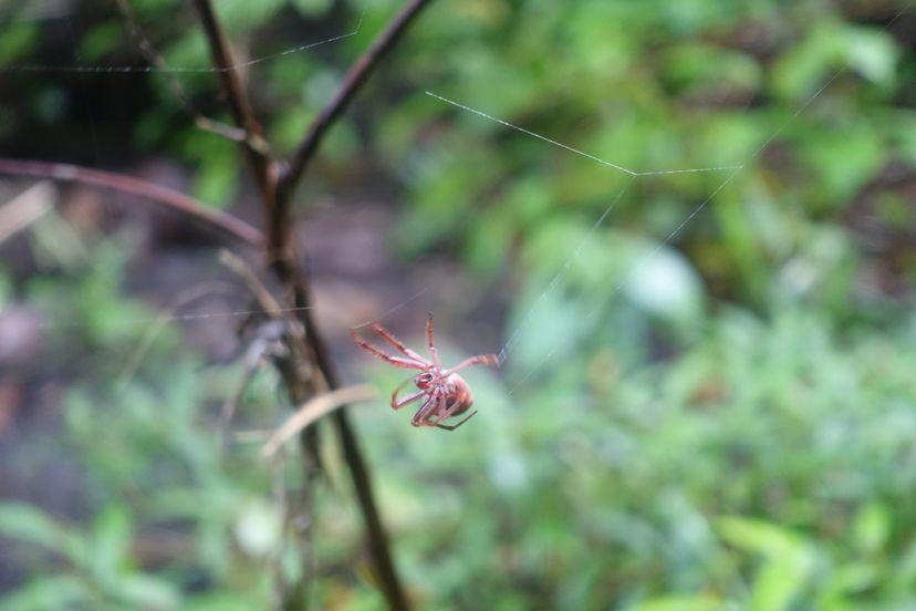 красный паук на Ломбоке