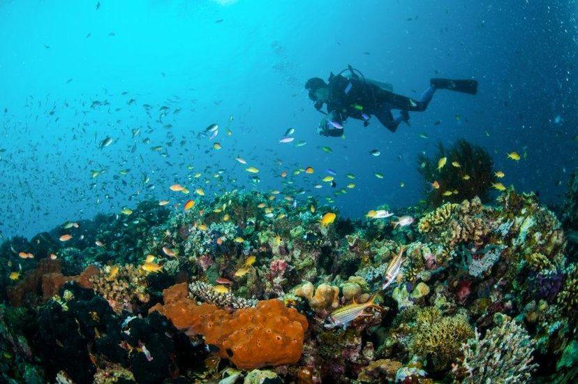 рыбки на острове Гили