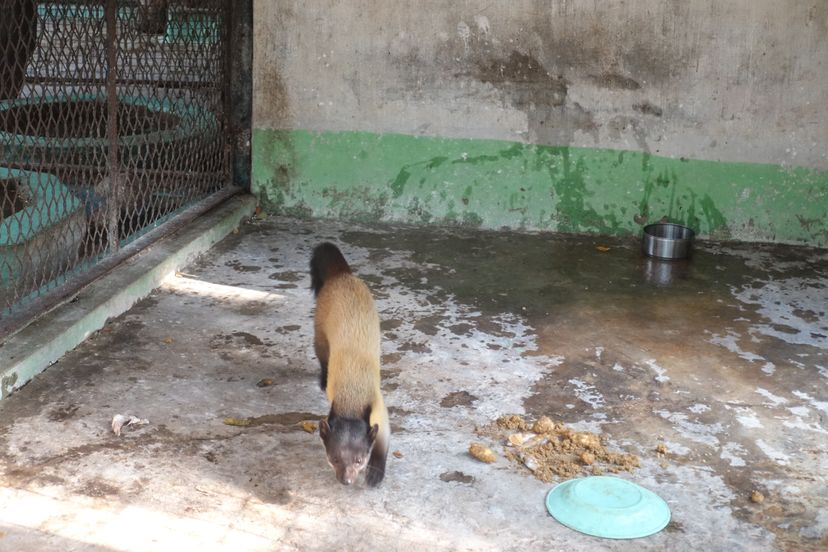 Зоопарк Янгон