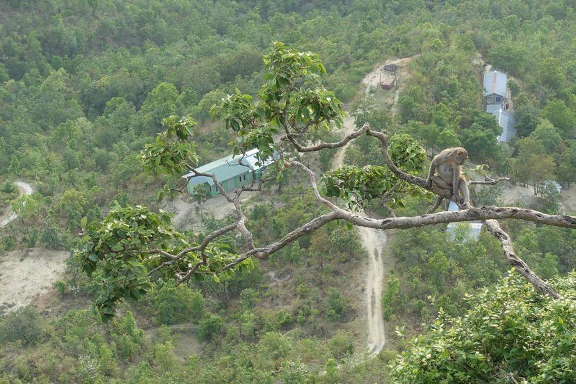 макака гора Попа