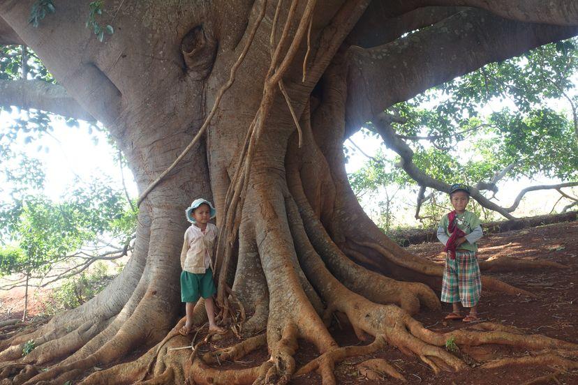 бирманские дети
