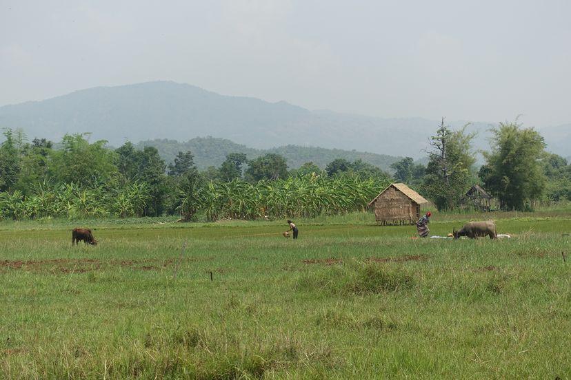 фермеры в Мьянме