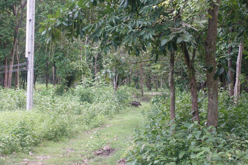 национальный парк парка Таиланда