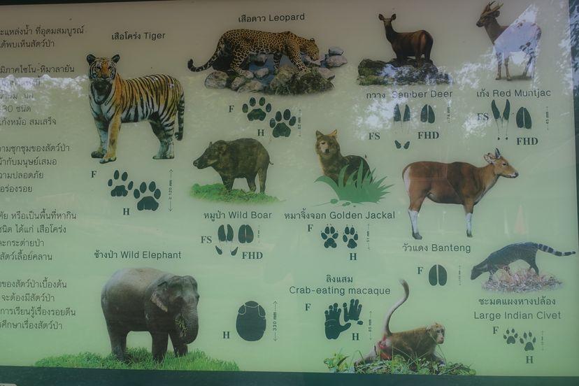 Животные в Таиланде