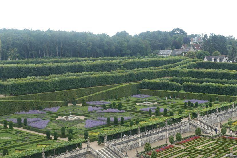 лавандовые сады Франция