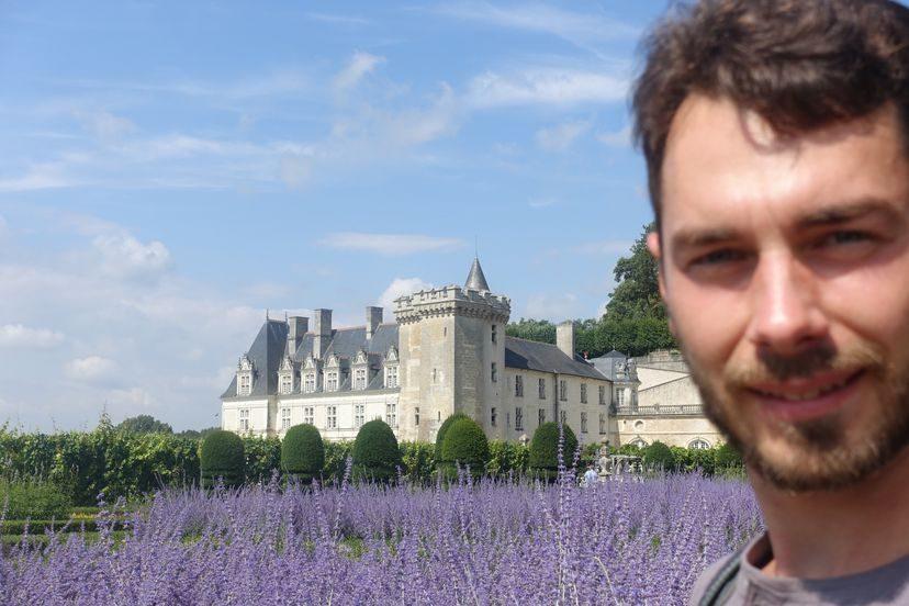 лаванда во Франции