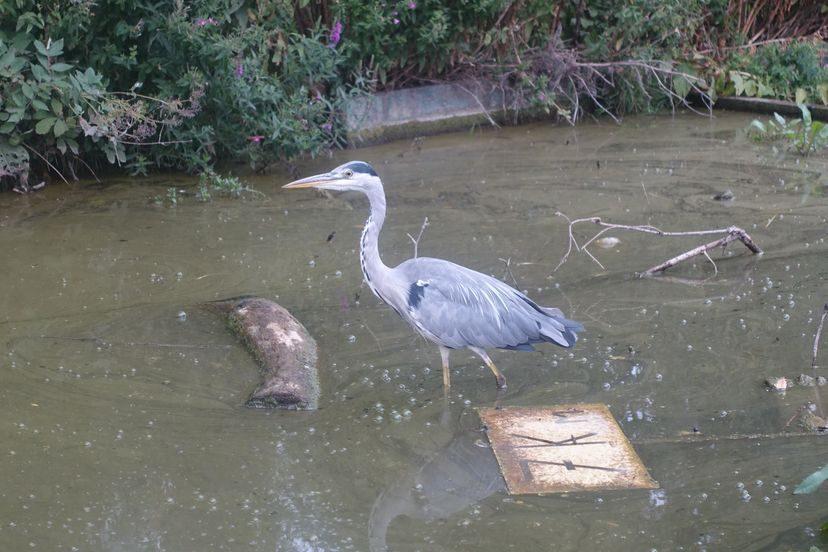 птицы в Лилле