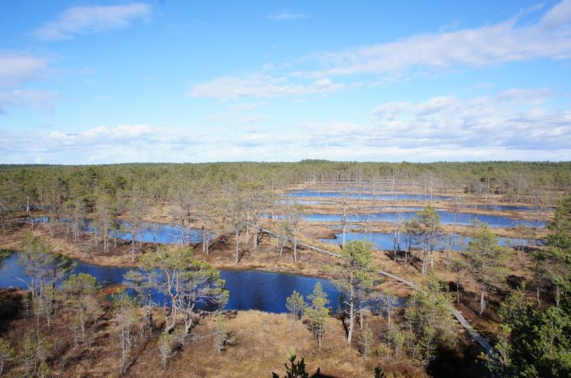 болото Viru Raba