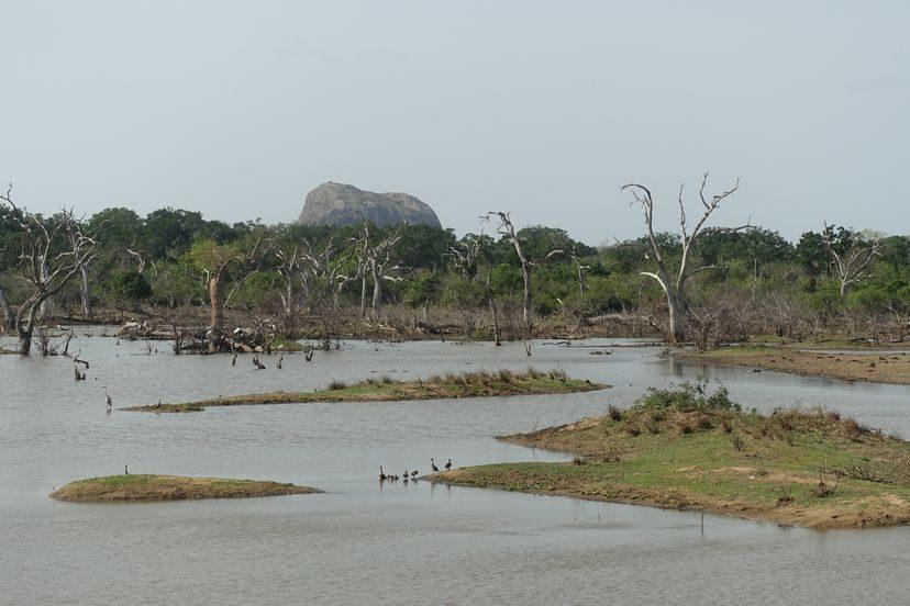 нацпарк Яла на Шри-Ланке