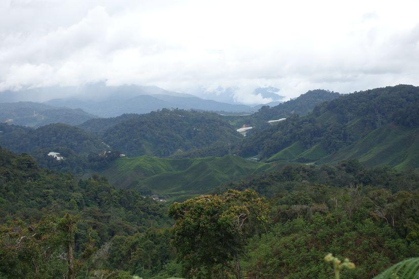 Кэмерон Хайленд / Cameron Highlands, Малайзия