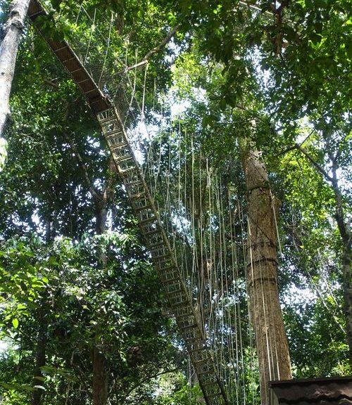 Национальный парк Таман Негара Паханг, Малайзия