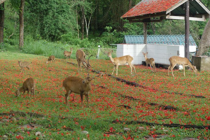 Природный заповедник Хуай Кха Каенг в Таиланде