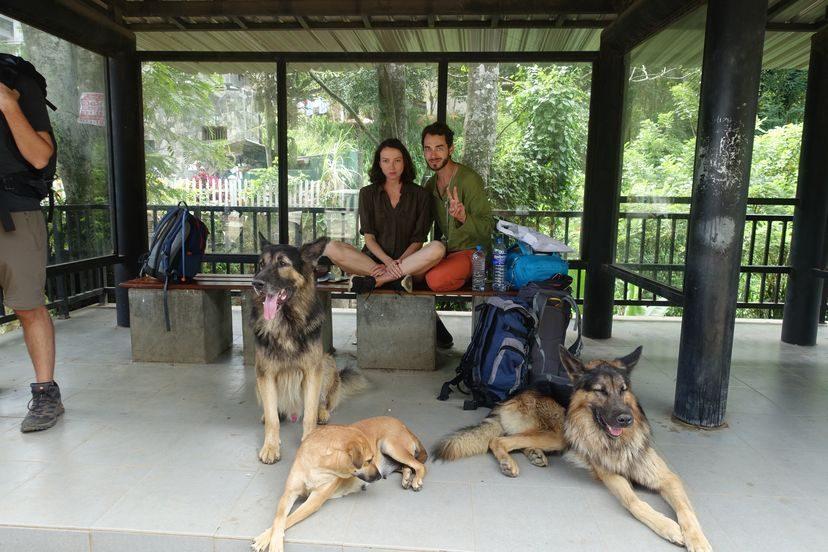 с собаками на Шри-Ланке