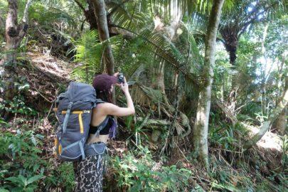 Трекинг в джунглях Бразилия.