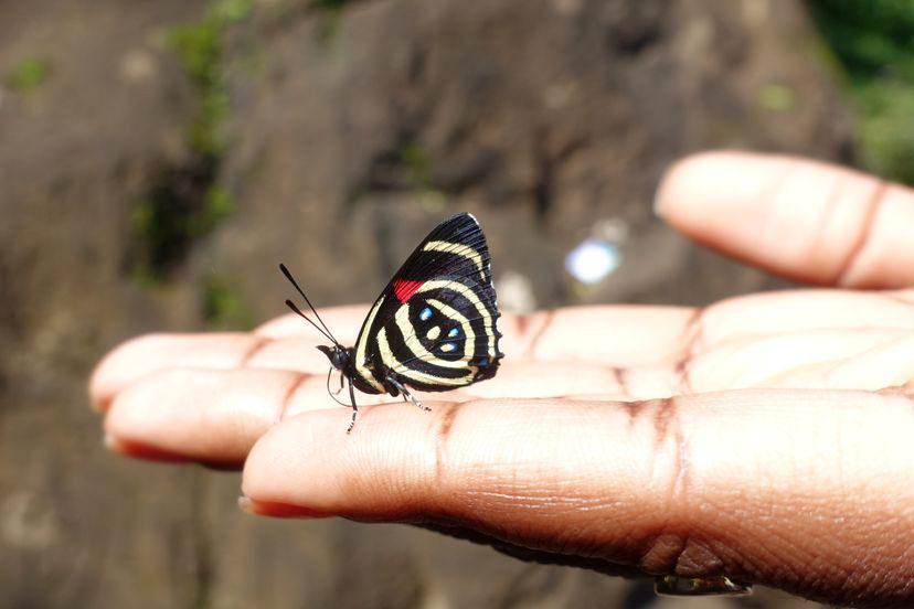 бабочка обычны на водопадах