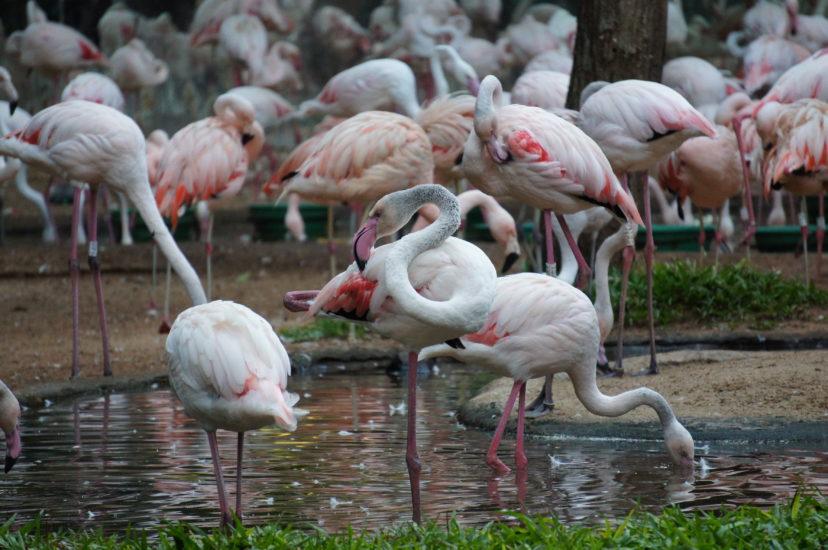 фламинго в Парке птиц рядом с национальным парком Игуасу