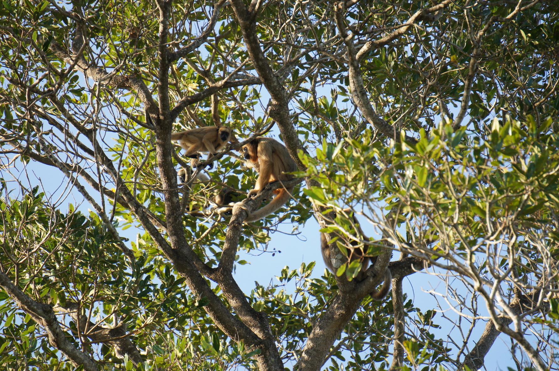 Пантанал - лучший заповедник в Бразилии для наблюдения животных