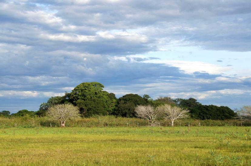 10 секретов успешного наблюдения за дикой природой